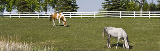 Durable Safe Horse Fence 2