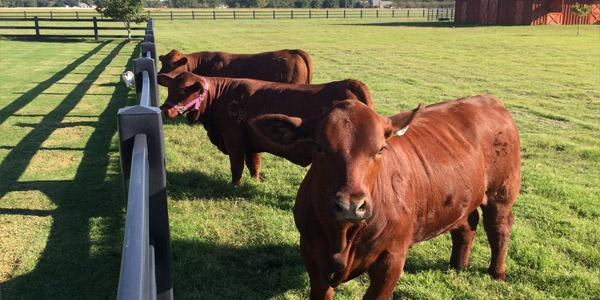 HDPE Cattle Fencing PVC Vinyl Plastic