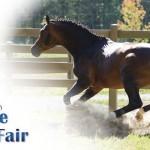 Illinois Horse Fair 2015