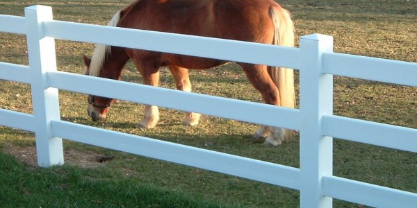 three rail hdpe equine ranch fencing 2 featured